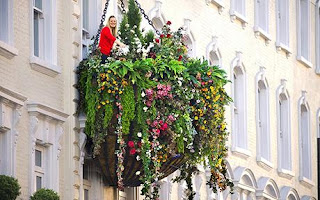 The Hanging Gardens of Paddington