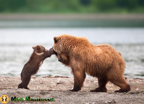 Urso fazendo carinho