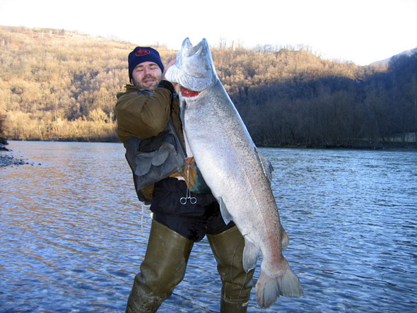 Mladica (Hucho hucho) HUCHEN+%28Hucho+hucho%29+drina+big+fishes+huge+world+record++massive+caught+records+largest+IGFA++biggest+fish+trophy+ocean+sea+monster+giant+images+lb+pound++caught++pictures+freshwater+30