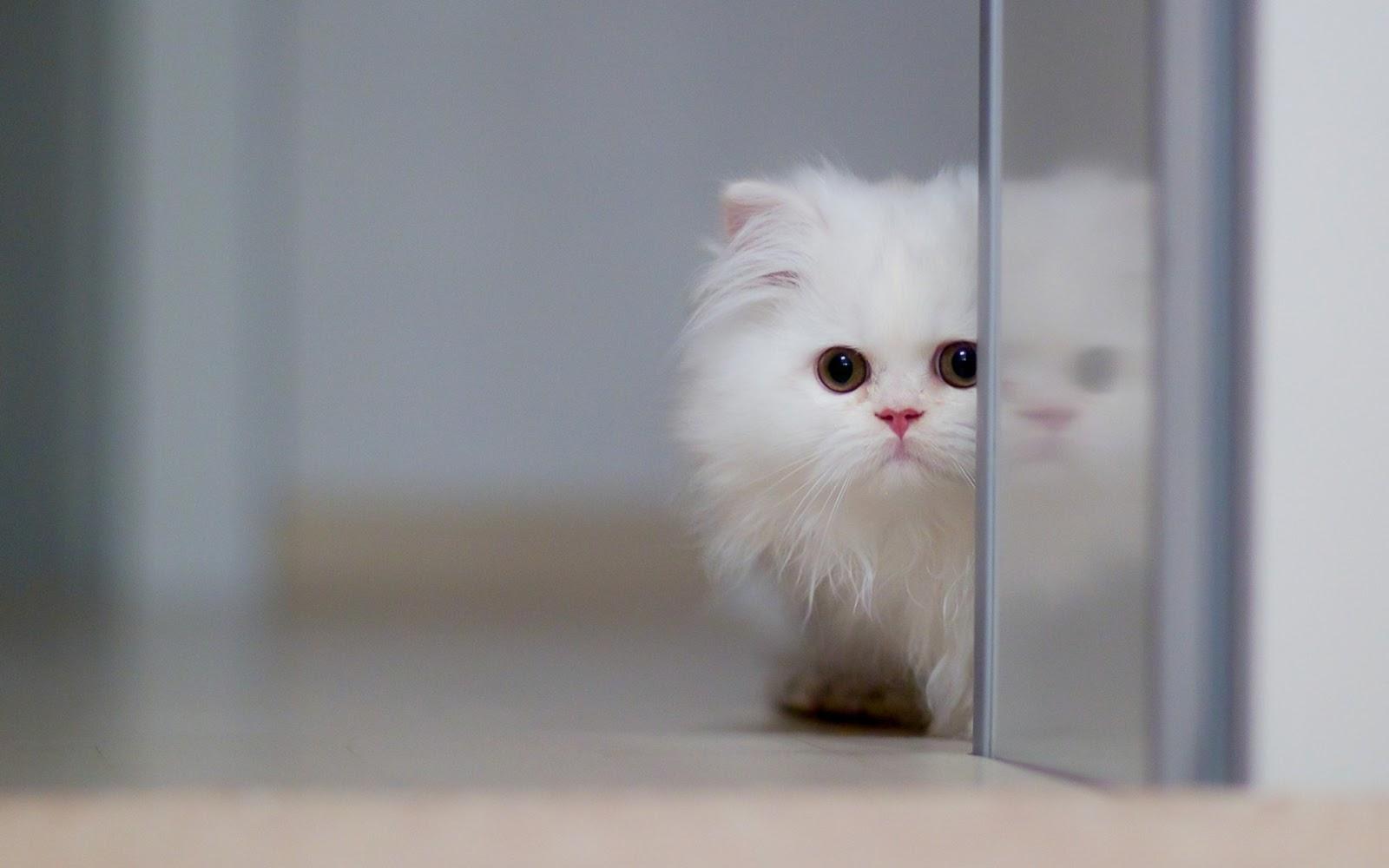 100 Wallpaper Kucing Lucu Dan Comel Kualitas Hd Kucing