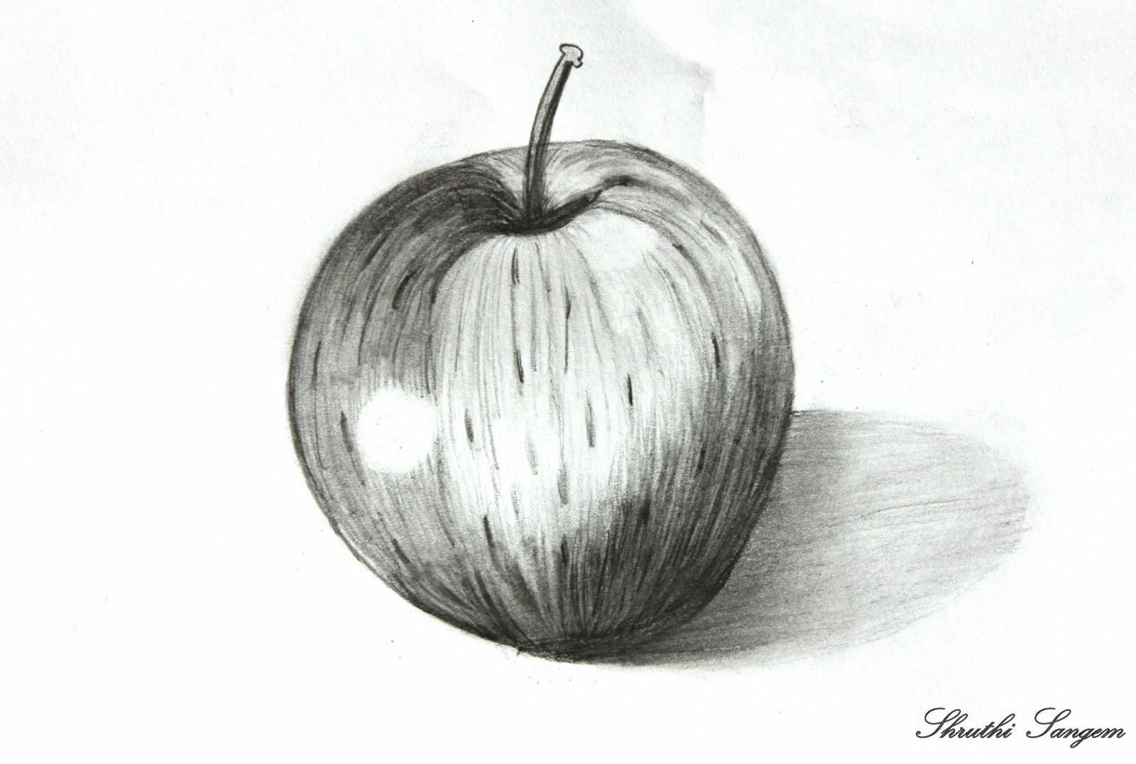 Pencil sketches apple