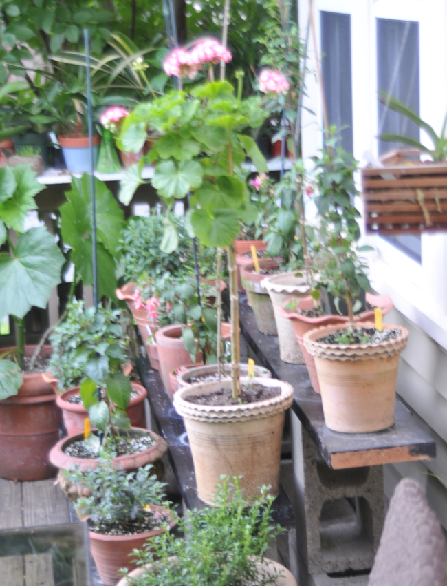 growing with plants 25 of my favorite container garden ideas