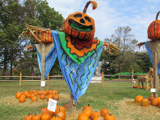 largest pumpkin