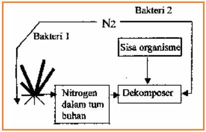 Ujian ecology materi biologi sma lengkap 23 berdasarkan daur nitrogen di diatas bakteri 1 yang mampu mengikat nitrogen bebas dari udara adalah ccuart Image collections