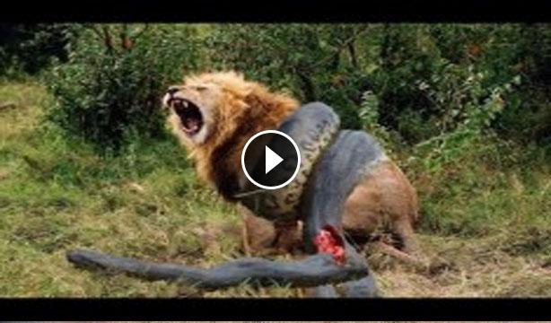 wild animal porn Ban wild animals in circuses