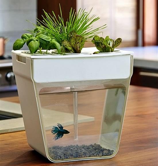 Aqua Farm Gadget for the lazy green-thumb pet owner