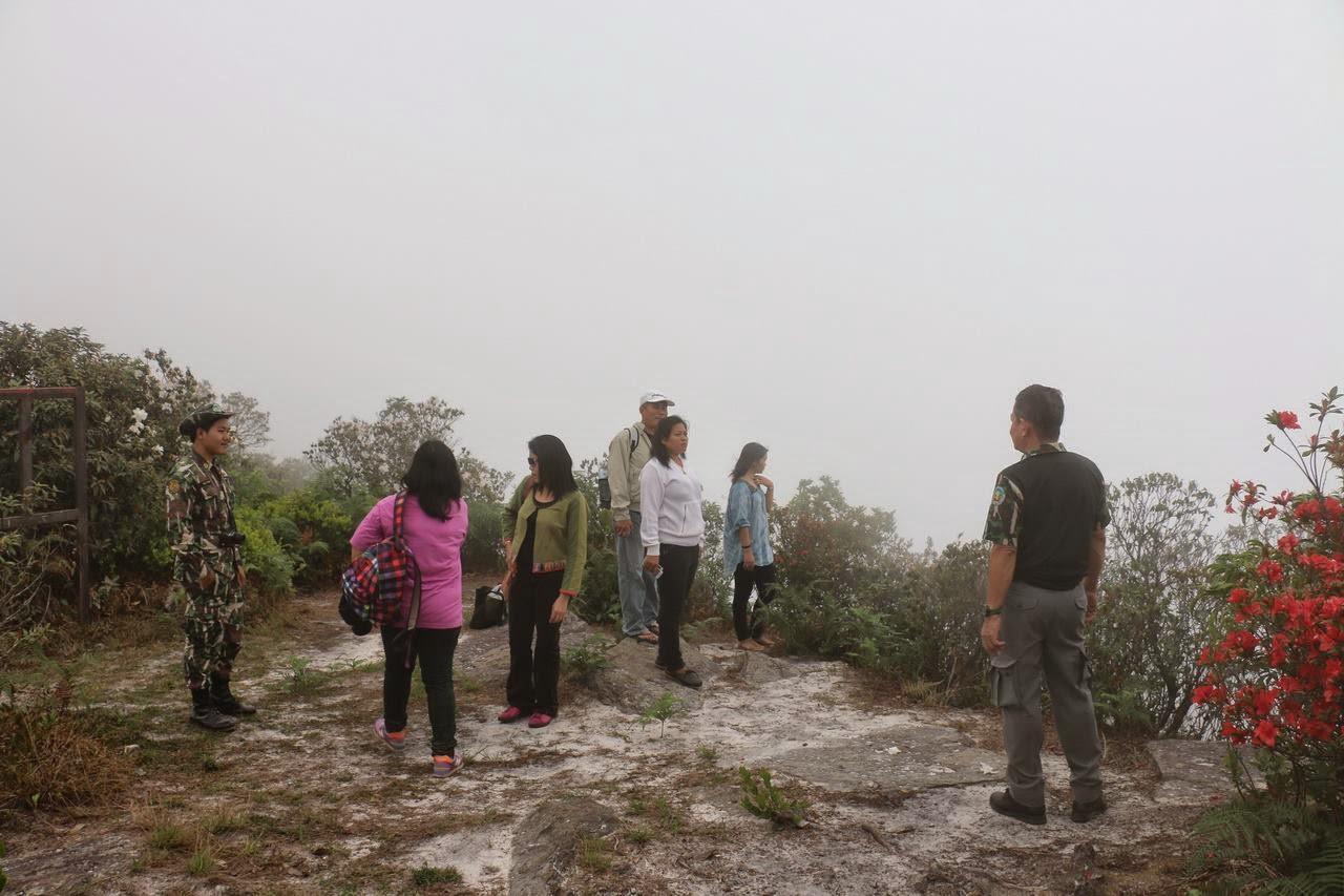 นักท่องเที่ยวหนีร้อนสัมผัสทะเลหมอกชมกุหลาบพันปีบานสะพรั่งที่ภูหลวง