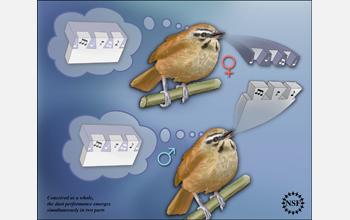 .: Bird Song Cooperation