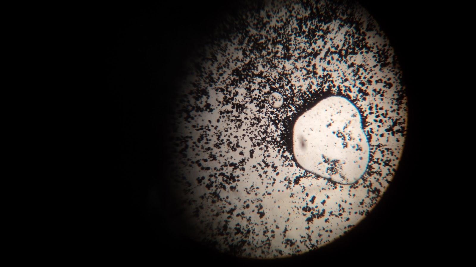 Laporan praktikum pengenalan mikroskop cahaya: contoh laporan