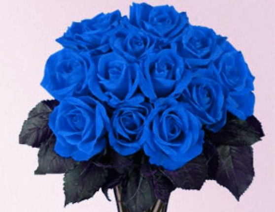 valentine's roses colors and meanings | enjoying wonderful world, Ideas
