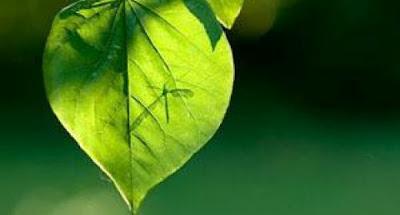 Addio zanzare! Scacciamole con gli oli essenziali