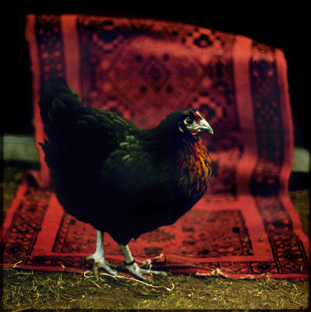The Nera - chicken. Photograph by Tim Irving