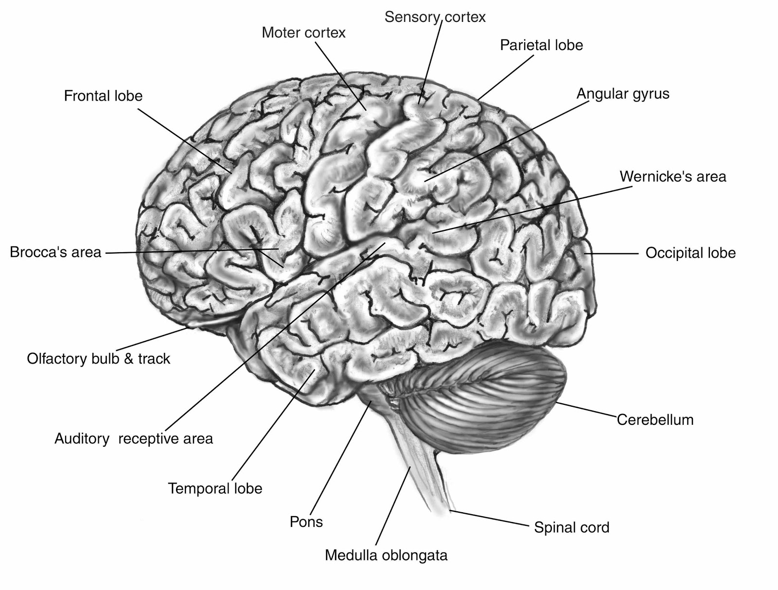 brain jack image  brain function map