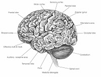 Brain Function Map