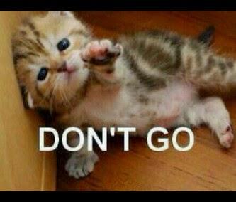 Kicau Angsa Kumpulan Meme Kucing Paling Gokil Dan Menggelikan