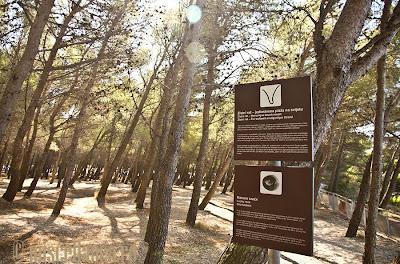 Bol forest