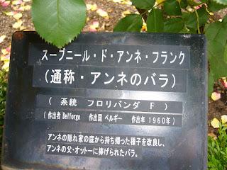 須磨離宮公園 王侯貴族のバラ園 スブニール・ド・アンネ・フランク
