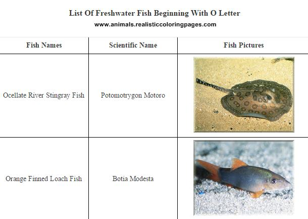 List of freshwater fish beginning with O