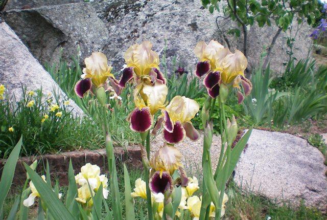 El jard n de los dragones colecci n de iris for El jardin de los dragones