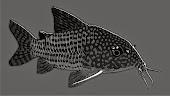 Finatics Tropical Fish