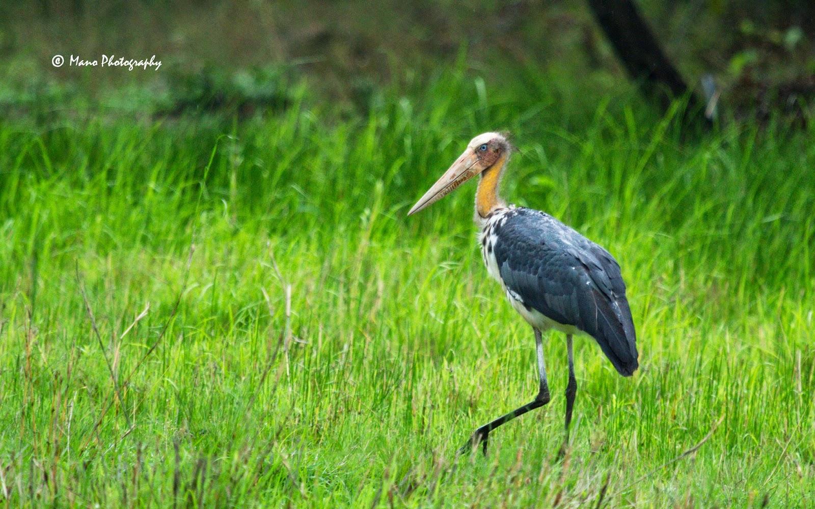 Mano Wildlife Photogra...