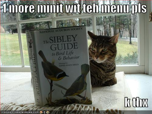 Download funny animals with funny saying 2012
