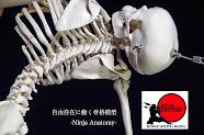 インストラクター最強の説明道具! 世界初の自由自在に動く骨格模型。