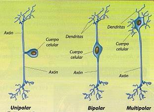 Neuronas Clasificacion