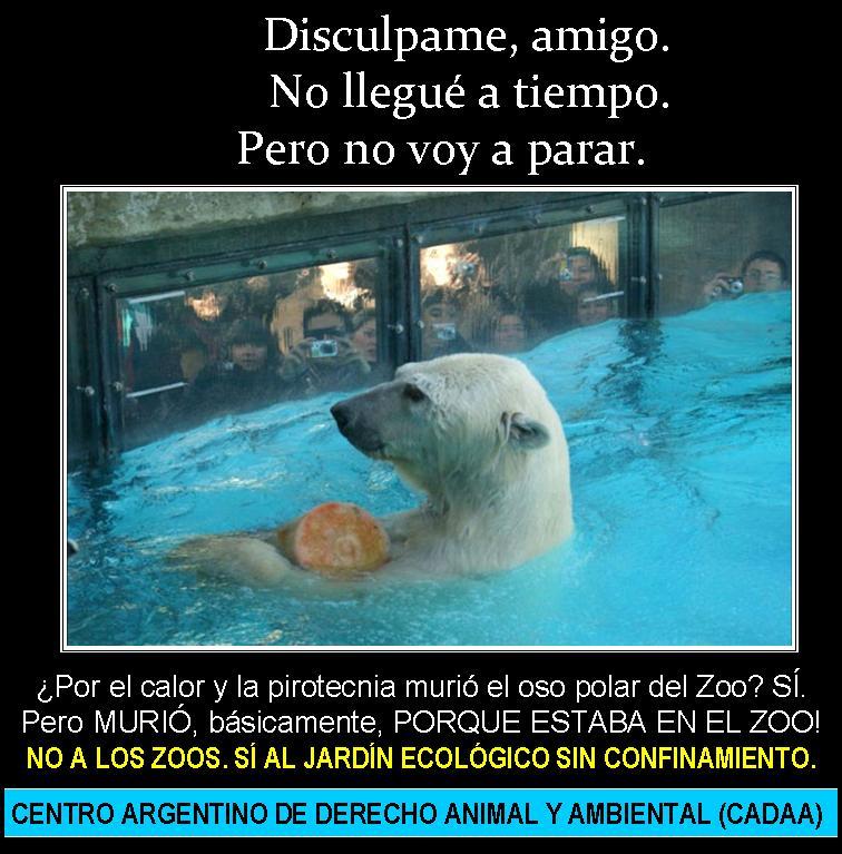 Pensamiento Sensible: Carta por la muerte de un Oso Polar