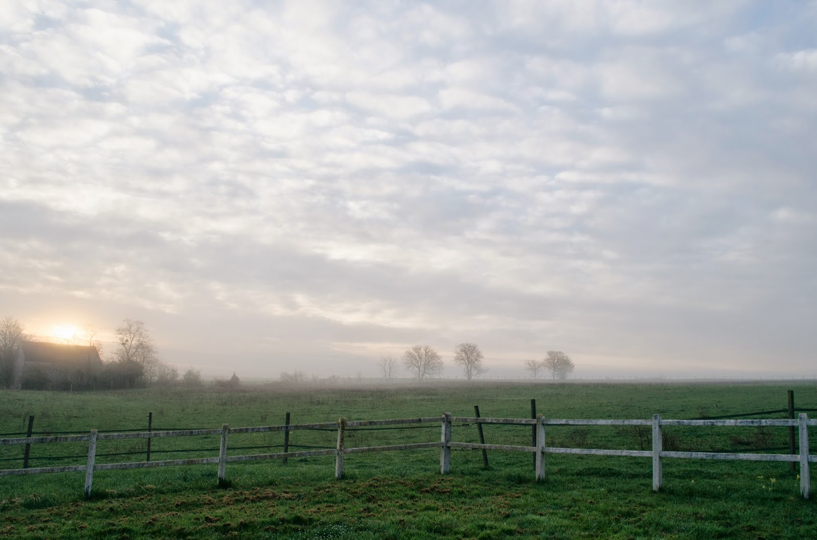 aesthetic fauna // foggy pasture, northern france
