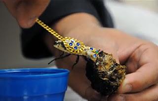 Maquech Beetles