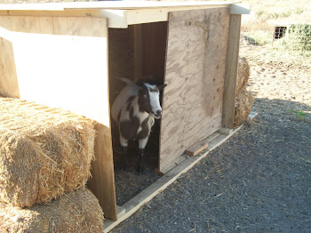 Billy in new shelter Steve built