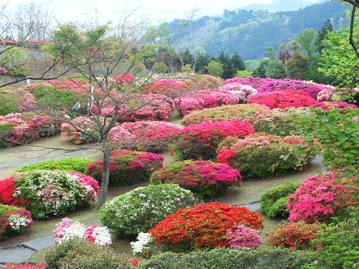 Kurume Japan  City pictures : Four Seasons in Japan: azalea festivals