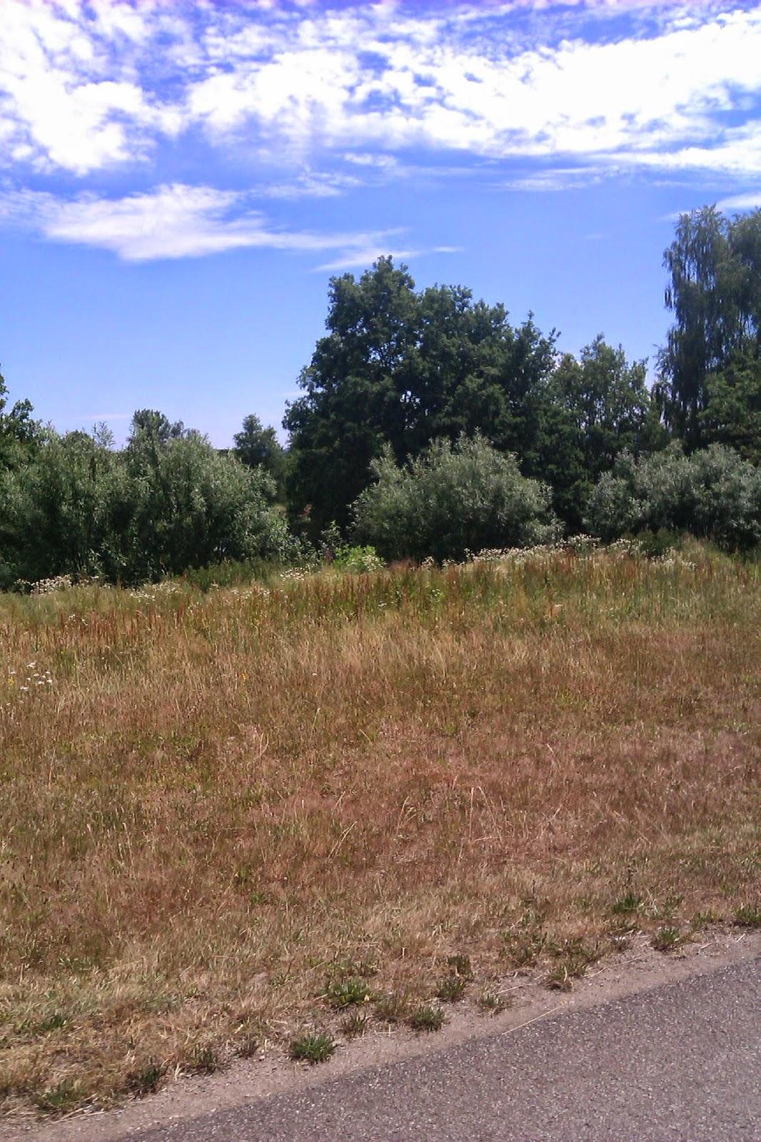 Natur in Nabburg fast da