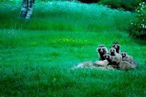 Koiraeläimet joukossamme