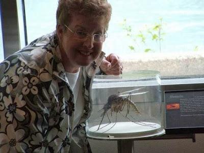 Con muỗi siêu khủng to nhất thế giới