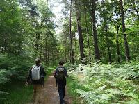 ボワ=ル=ロワからフォンテーヌブロー=アヴォン De Bois-le-Roi à Fontainebleau-Avon