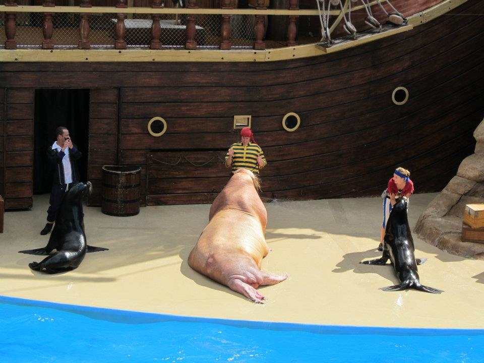 Seaworld Sea World Orlando Clyde and Seamore Take Pirate Island