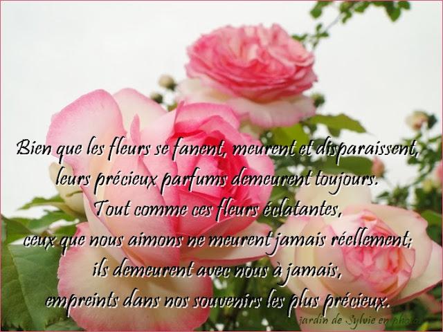 rose fleur poème