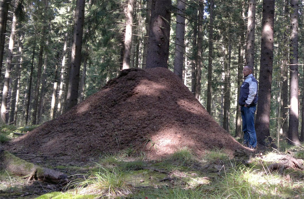 Största myrstacken som finns eller hur? :) I´ve found it!