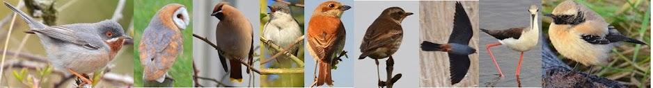 sh4rpy's birding blog