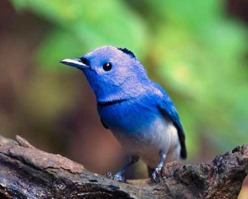 ما القصة الحقيقية حول عصفور تويتر الازرق