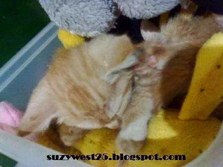 Kucing - Kucingku