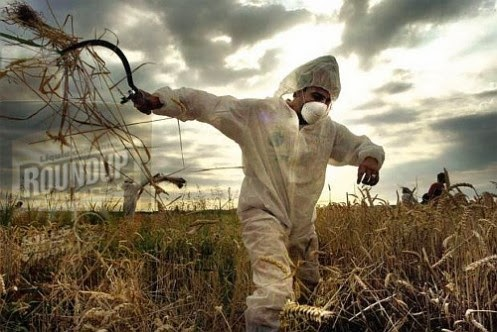 Los OGMs dañinos medioambiente