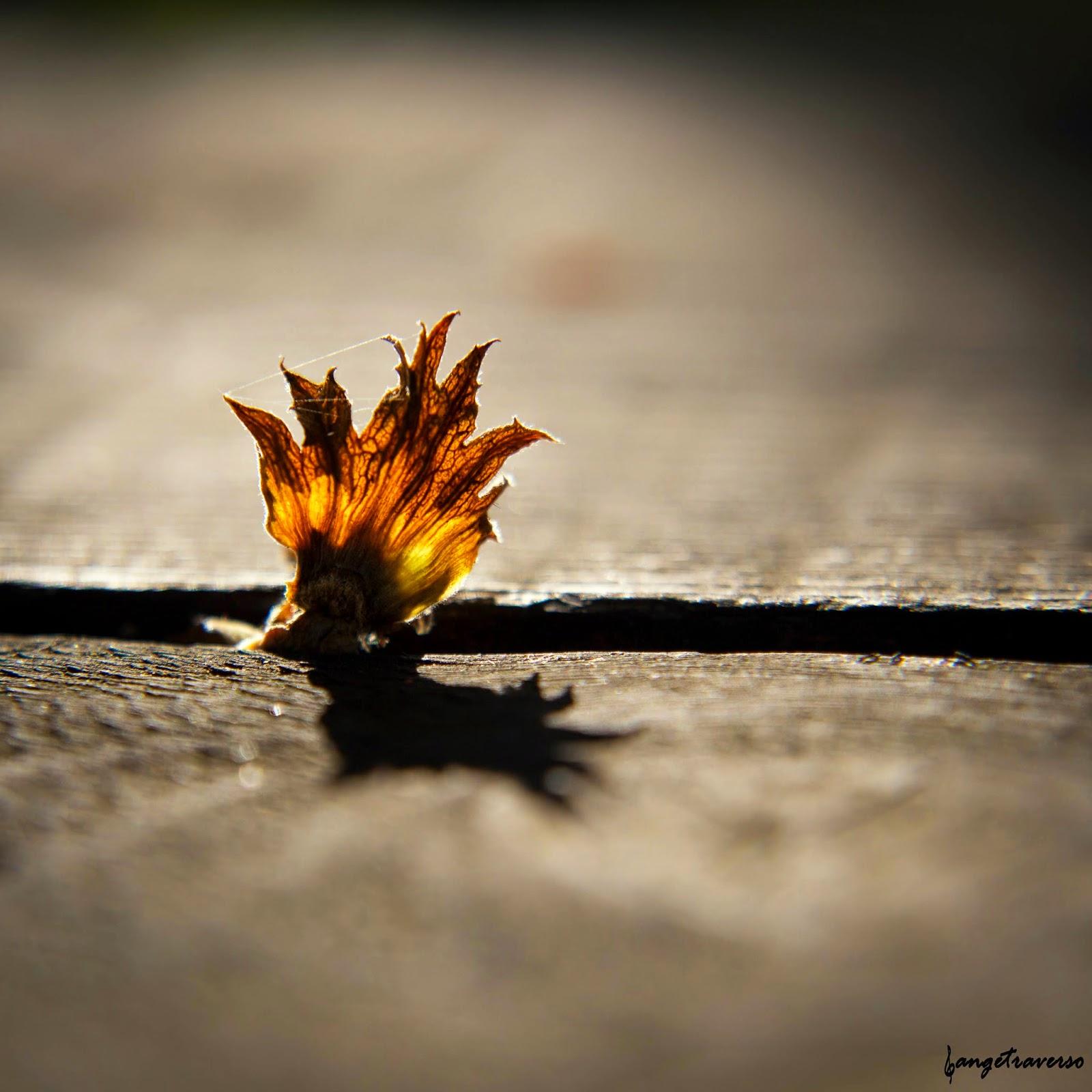 Couleur d'automne, depuis le col du Clergeon