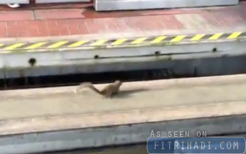 Video Tupai Halang Perjalanan Monorail