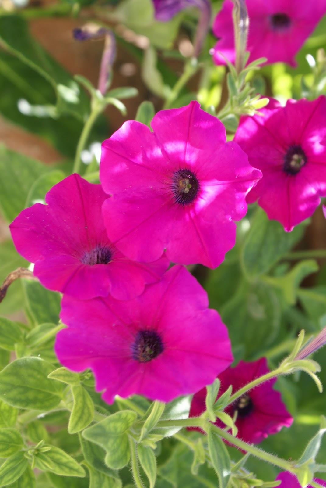 imagens de jardim horta e pomar : imagens de jardim horta e pomar: do jardim, do pomar e da horta: Mais um sábado de trabalho na horta