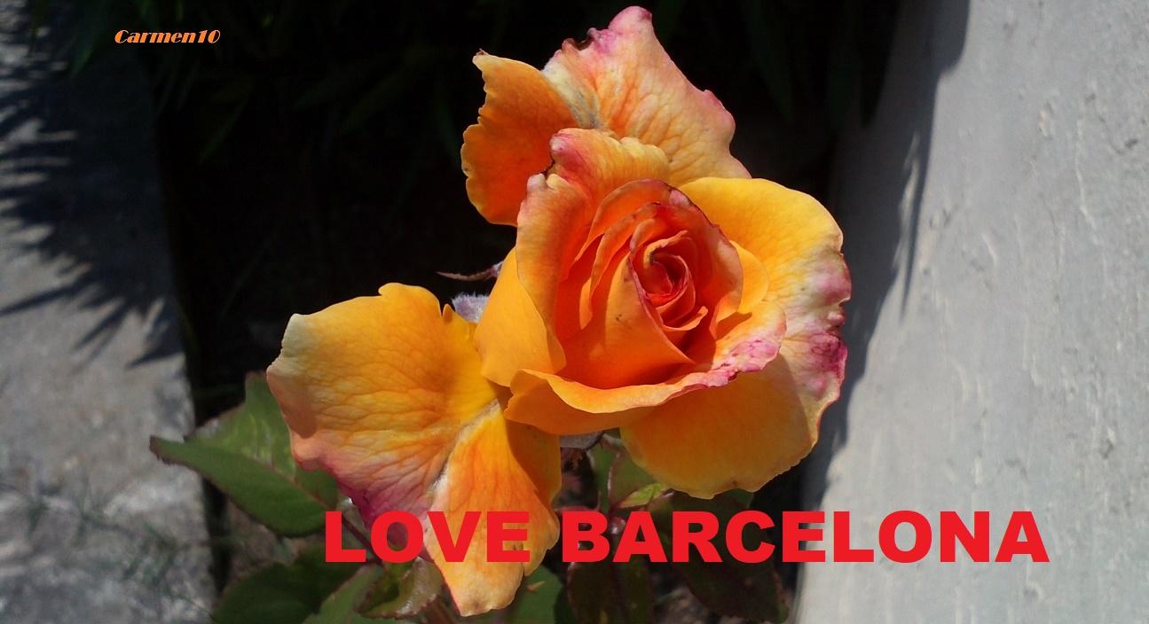 LOVE CATALUÑA