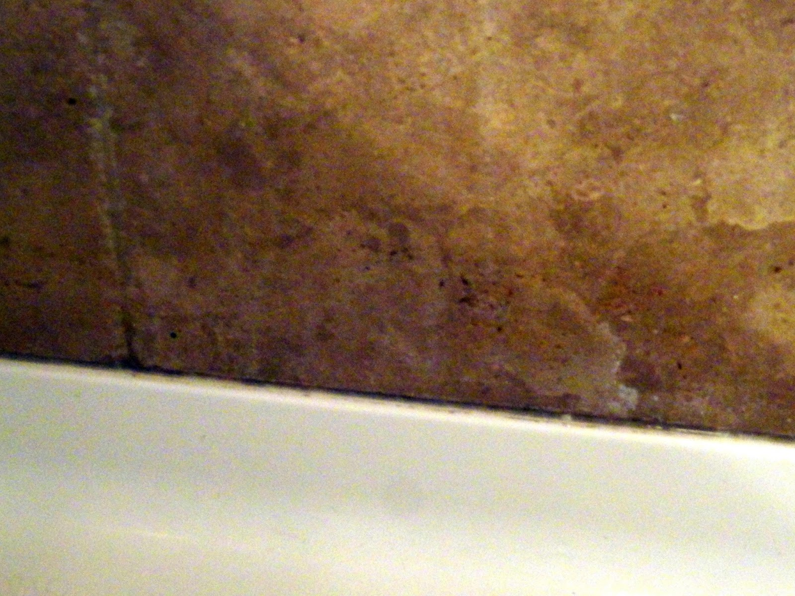 getting rid of mold in your shower rachel teodoro