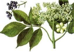 Remedii naturiste cu soc